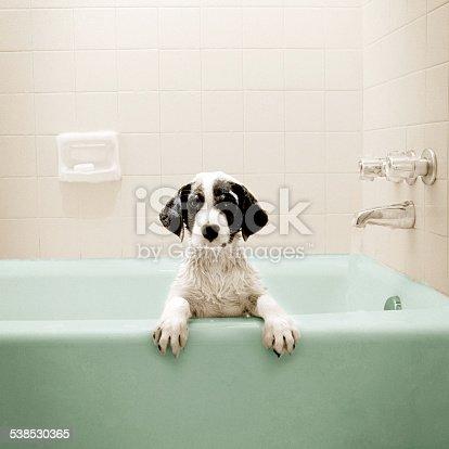 Puppy in Bathtub