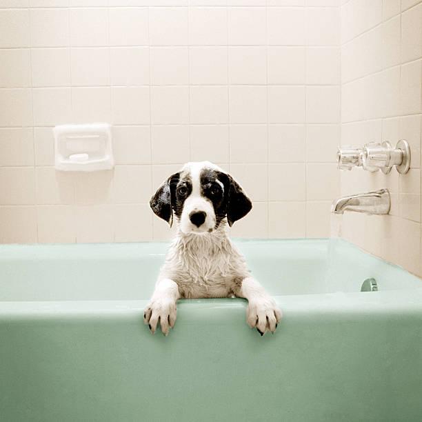 Cachorrinho com banheira - foto de acervo