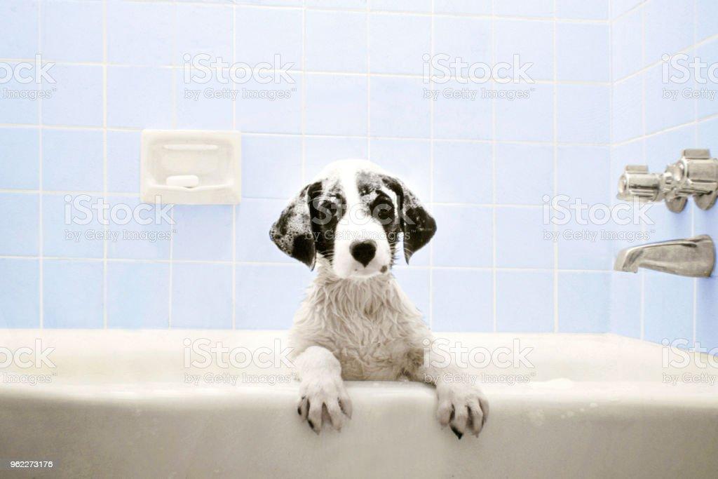 Welpen in der Badewanne – Foto