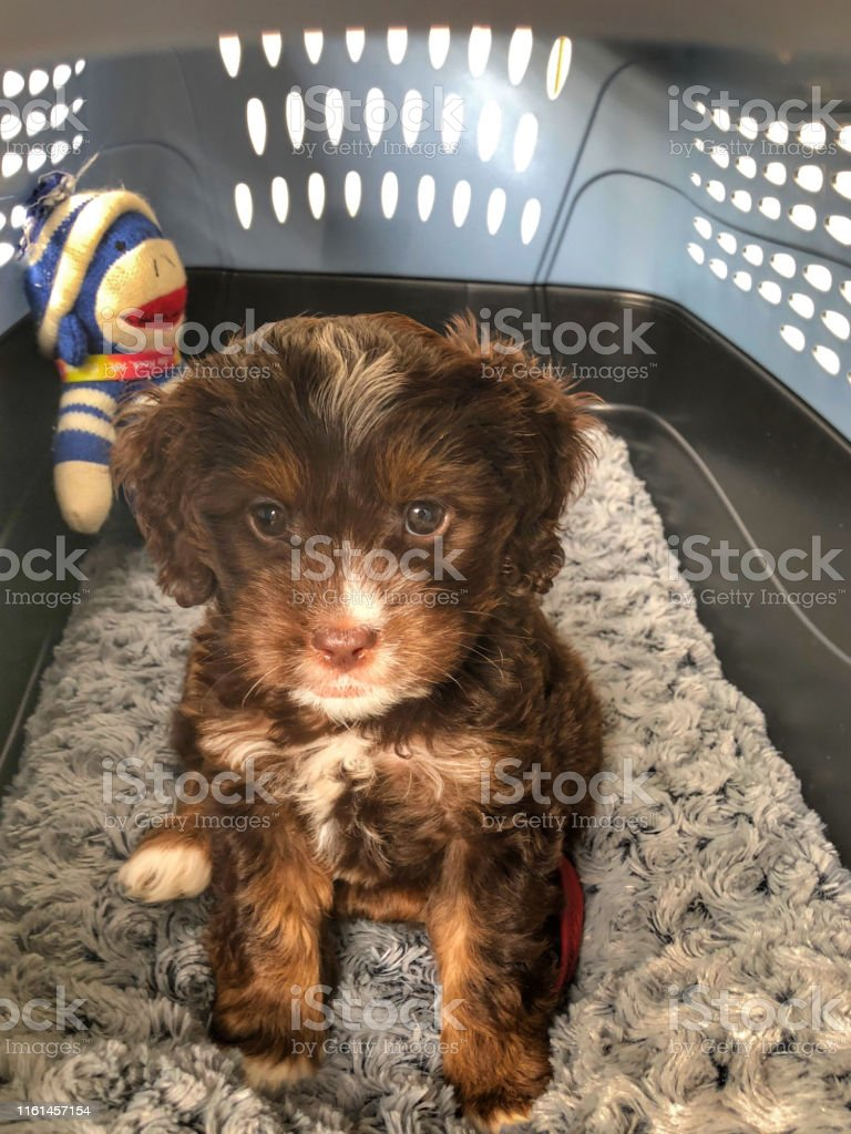 Puppy in Crate with favorite toy
