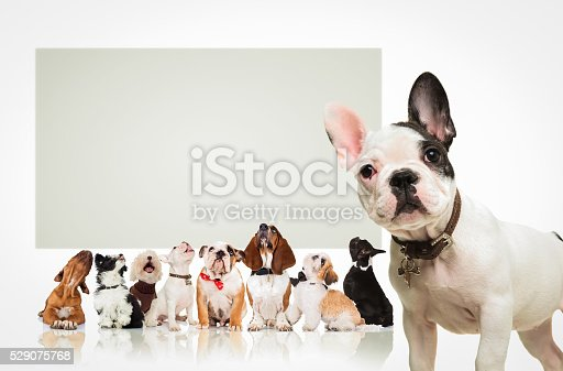 istock puppy  in front of  many dogs looking up at billboard 529075768
