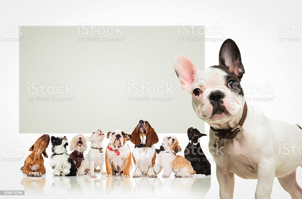 puppy  in front of  many dogs looking up at billboard stock photo