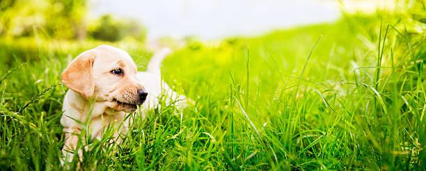 Puppy in the grass picture id482645965?b=1&k=6&m=482645965&s=612x612&w=0&h=cznhyb  fgkw8wzzl rd2fhelhpjooqscrgihf5nsqa=