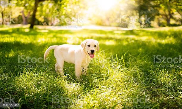 Puppy in the park picture id496722937?b=1&k=6&m=496722937&s=612x612&h=kl ogfecblgpekzf4 ipe3rnevfv7w9gfaczv2tuzne=