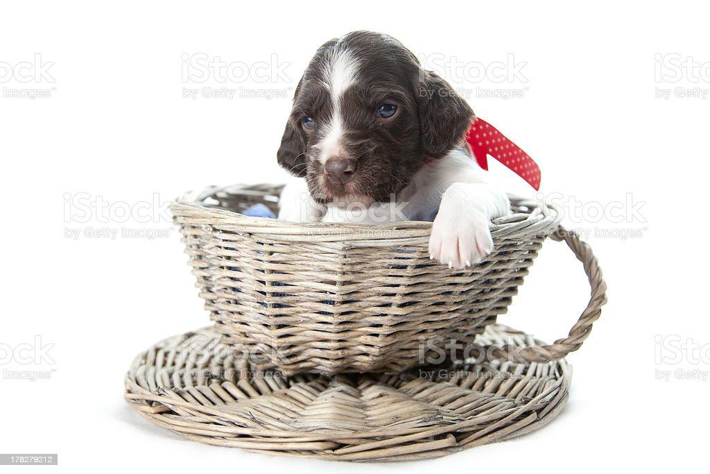 Puppy in wicker basket stock photo