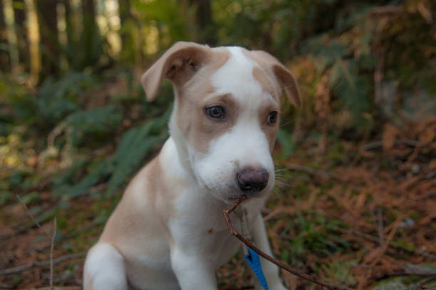 Puppy in Woods stock photo