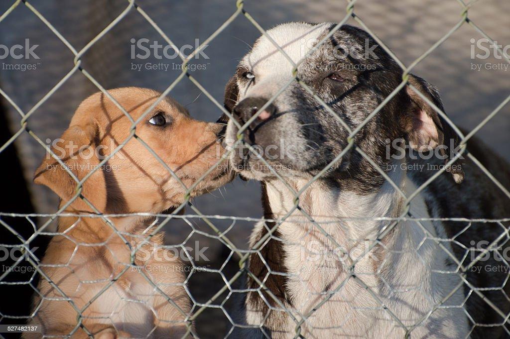 Puppy kissing Mom stock photo