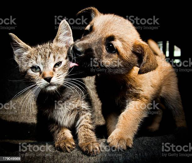 Puppy kitty lick kiss and love picture id179049569?b=1&k=6&m=179049569&s=612x612&h=vczeh0kryb3r rvi1okjpofvmginysoykz44hkucu2k=