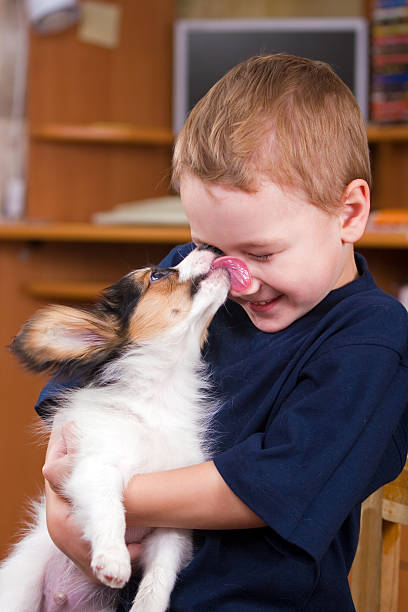 Puppy licking childs face  licking stock pictures, royalty-free photos & images