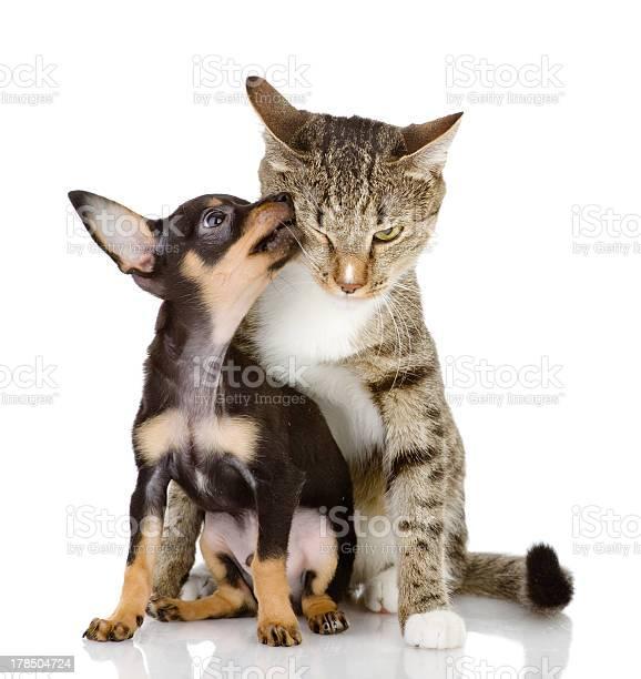 Puppy licking on a tabby cats face picture id178504724?b=1&k=6&m=178504724&s=612x612&h=nbtiyh2buzba4r38nsi0phmahjgekawqqzrn67psqre=