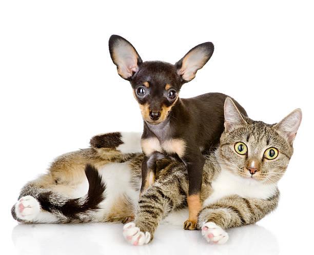 Puppy lies on a striped cat picture id166285695?b=1&k=6&m=166285695&s=612x612&w=0&h=twisog14xrzrryelq12x9uhmgqawvjduer1vjv2vdeg=