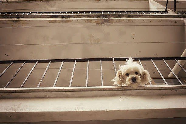 Puppy looking down from balcony – Foto
