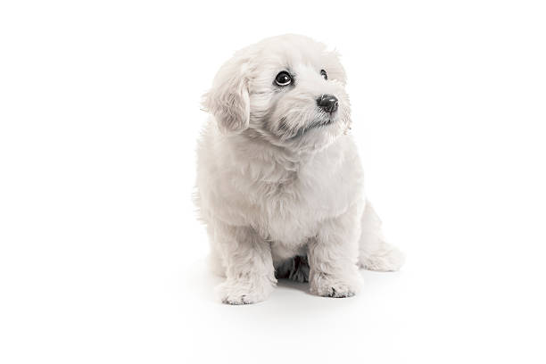 Puppy looking guilty picture id185868545?b=1&k=6&m=185868545&s=612x612&w=0&h=9ypfk37niemqucvj078tirrkanpxan65rqckptjpclk=