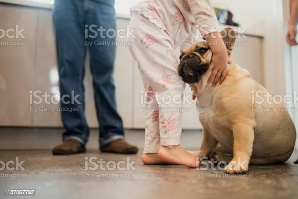 Puppy love picture id1137067792?b=1&k=6&m=1137067792&s=612x612&h=fpiqew7 ntpmecief50wkcginqobwygwwpovstasnz4=