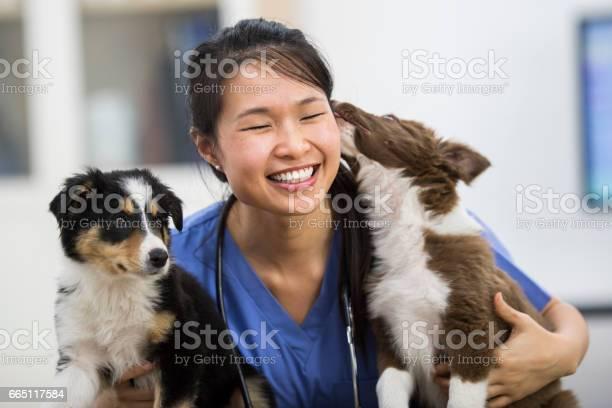 Puppy love picture id665117584?b=1&k=6&m=665117584&s=612x612&h=uouw1uhpe2xiaon2jqjyinype5kxjojnsk631c0mh q=