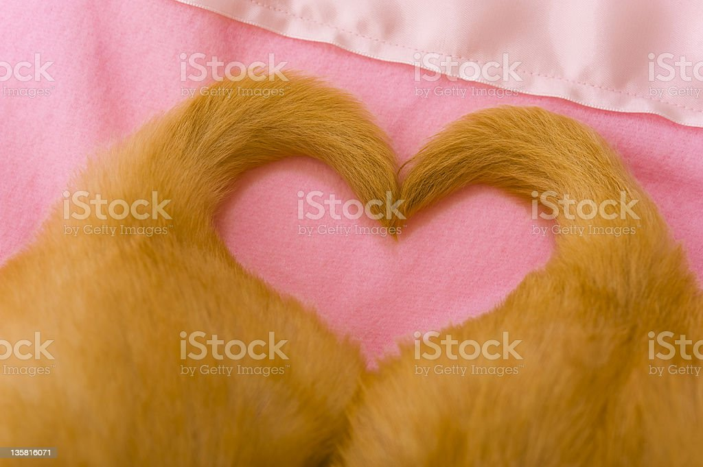 Puppy Love, with heart shaped tails royalty-free stock photo