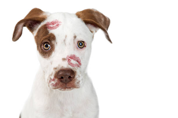 Puppy Love With Lipstick Kisses stock photo