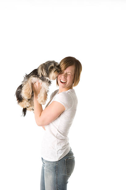 Puppy Loves Its Owner A cute Maltese-Shitzu mix puppy loves its owner. animal saliva stock pictures, royalty-free photos & images