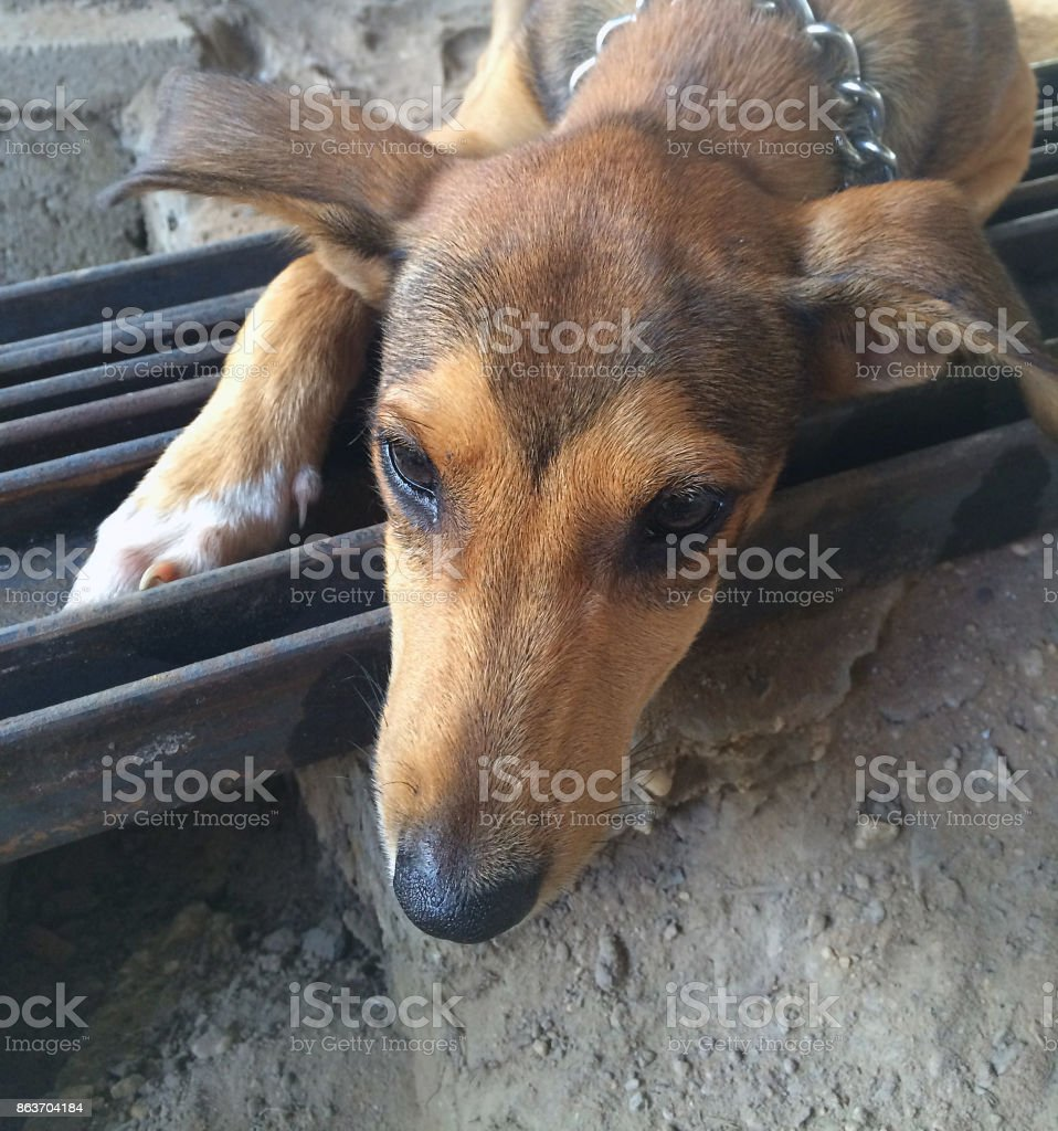 Puppy lying on steel stock photo