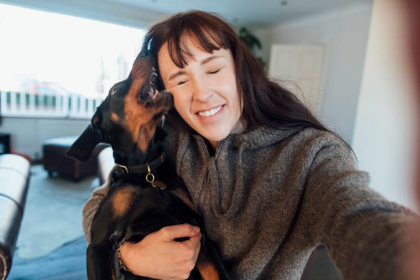 Puppy Memories Woman taking a selfie with her doberman puppy at their home in the North East of England. The puppy has his mouth open while she laughs. DOG BITE hug stock pictures, royalty-free photos & images
