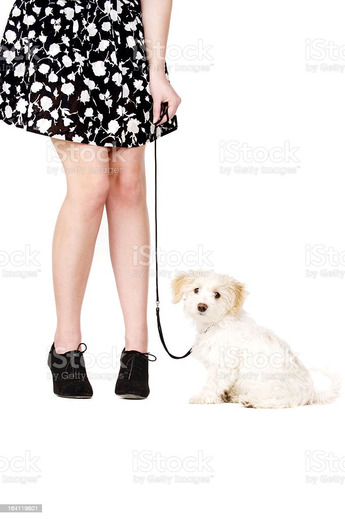 Puppy next to a woman's legs on black lead stock photo