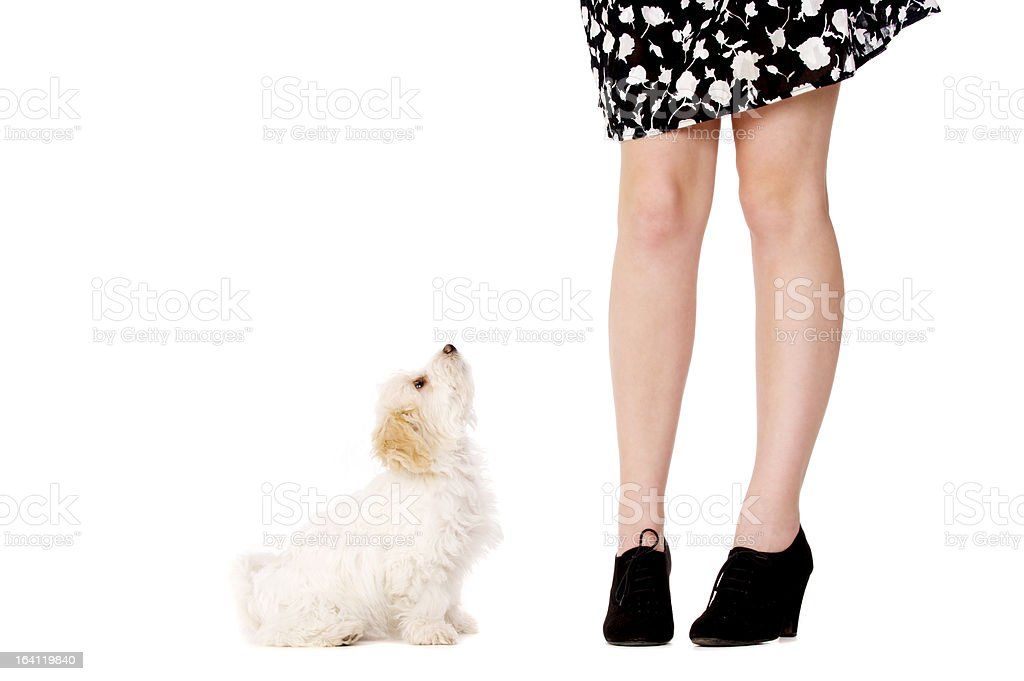 Puppy next to a woman's legs stock photo