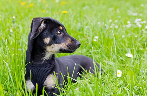 Puppy of mixed breed picture id599145272?b=1&k=6&m=599145272&s=612x612&w=0&h=e3uz q3gq28 ac70g2cuf3gh4iavfozdxiar503pifi=