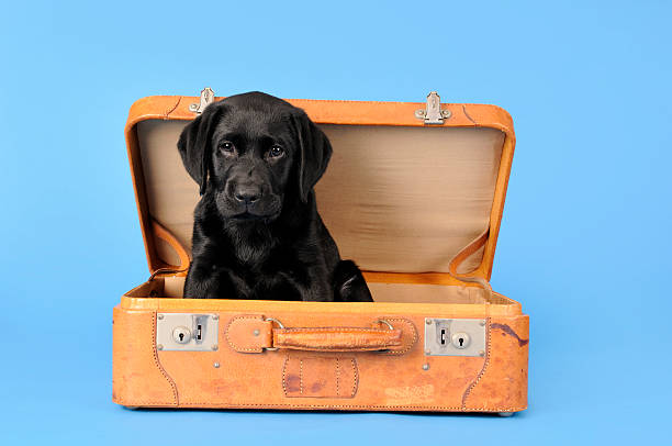 Puppy on holiday stock photo