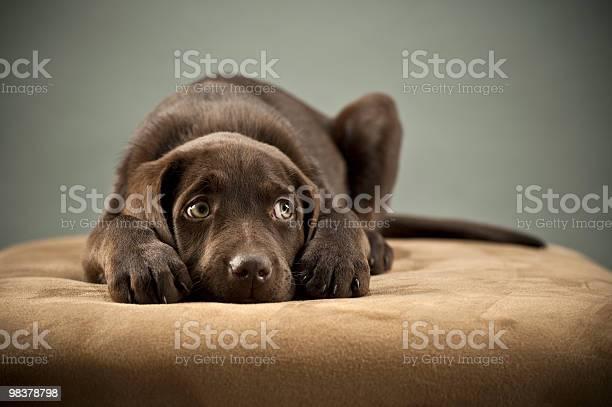 Puppy on ottoman picture id98378798?b=1&k=6&m=98378798&s=612x612&h=4nkqykaba8oyxpgyj2o32bnaxtmc3gj4dfne1bmvef8=