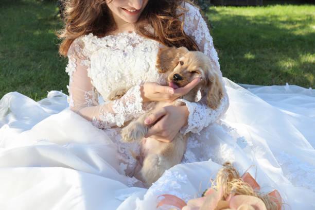 Puppy on wedding day picture id810137388?b=1&k=6&m=810137388&s=612x612&w=0&h=altgazymujbmsigsk0brdmalp mglf2vlnofymlkwqa=