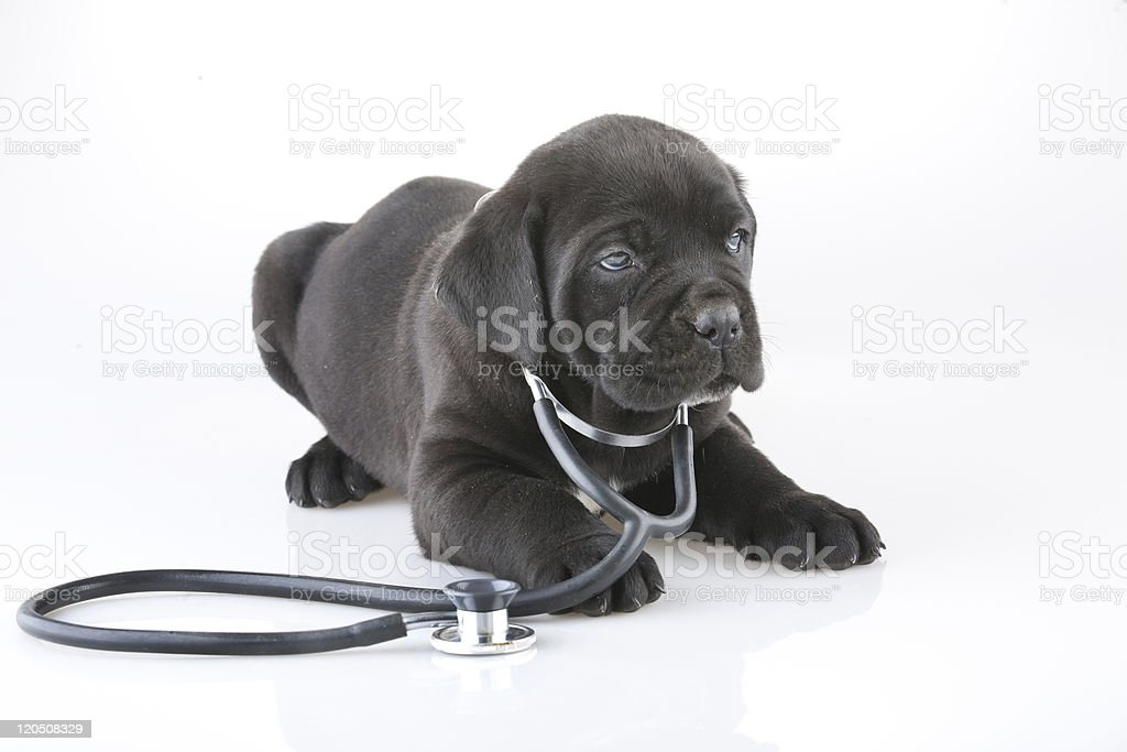 DR puppy stock photo