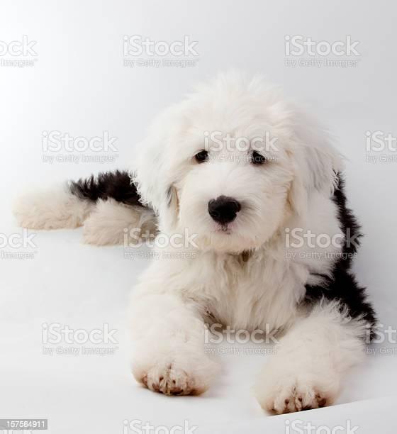 Puppy picture id157564911?b=1&k=6&m=157564911&s=612x612&h=opf2vu3 o4gy bops0nxpa1bg8gfdqd0cz1uo3fvs c=