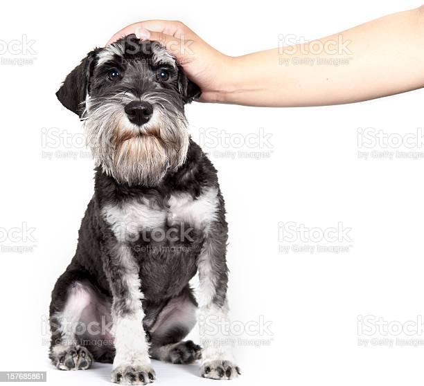 Puppy picture id157685861?b=1&k=6&m=157685861&s=612x612&h=76llenmej4gpxkv x6jv12valqh90glzyoqu5aizixo=