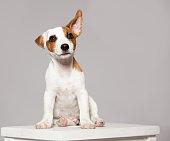 istock Puppy 490022138