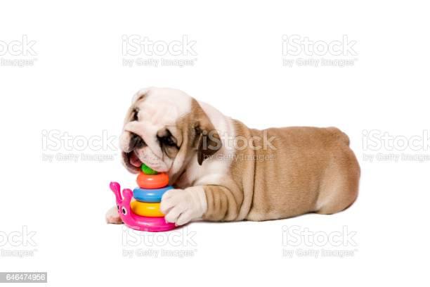 Puppy picture id646474956?b=1&k=6&m=646474956&s=612x612&h=wlw nep y 6jppqaf75hg5fwjrvrwy81niz4jdsor y=