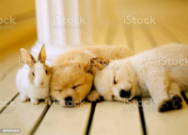 Puppy picture id665855600?b=1&k=6&m=665855600&s=612x612&h=j mbksfct6tnb iqkpyh8krnai6xdpprykkfqhh3hgo=