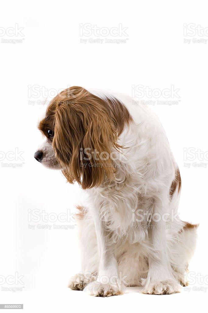 puppy royaltyfri bildbanksbilder