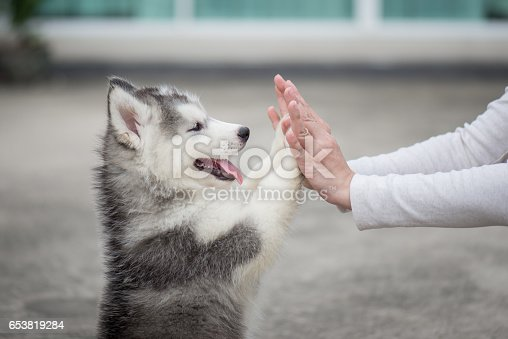 istock Puppy pressing his paw against a Girl hand 653819284