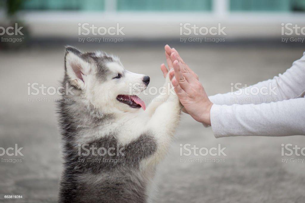 Cachorro presionando su pata contra una mano chica - foto de stock
