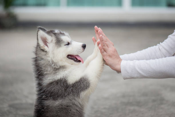 puppy pressing his paw against a girl hand - cute stock pictures, royalty-free photos & images