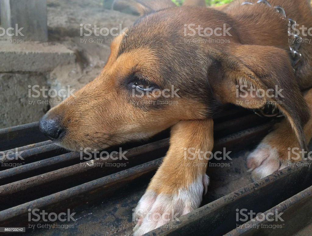 Puppy resting on steel stock photo