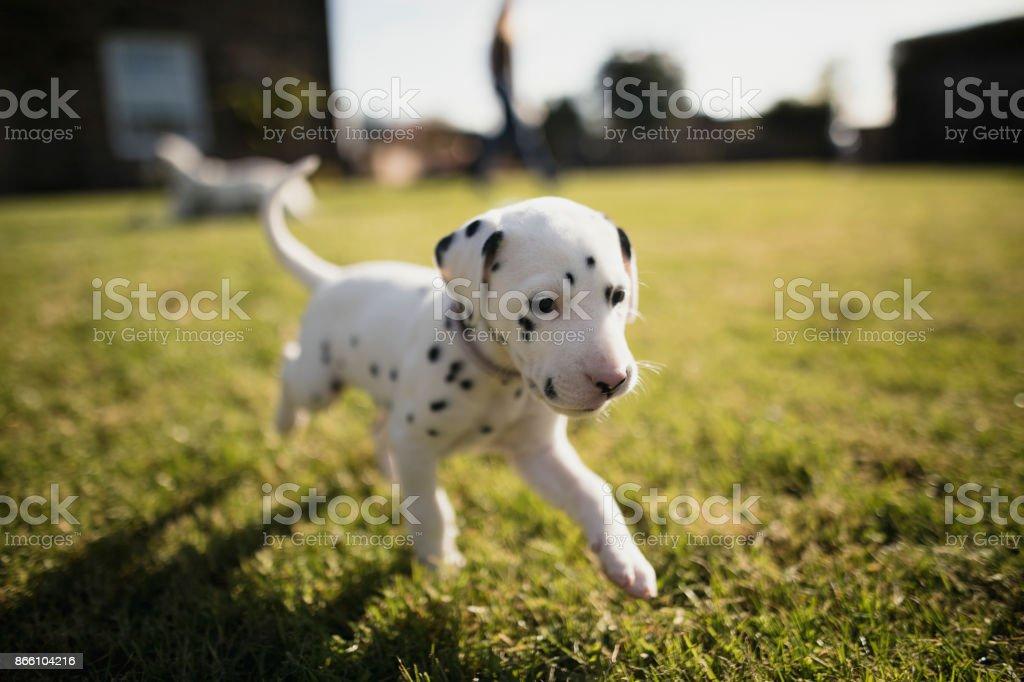 Perrito en el jardín - foto de stock