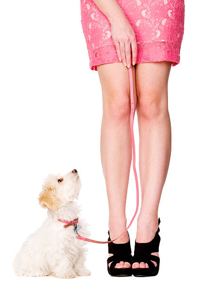 Puppy sat looking up at woman wearing a pink skirt stock photo