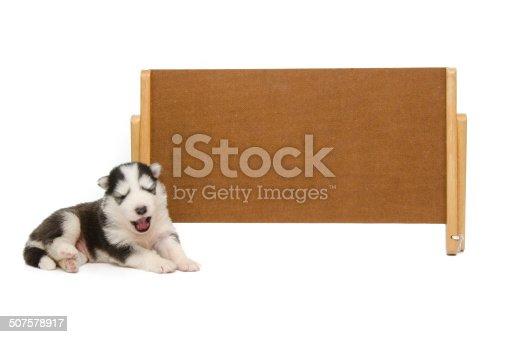 istock Puppy sleep with banner 507578917