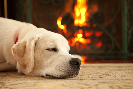 Dog laying near a fireplace that's lit.