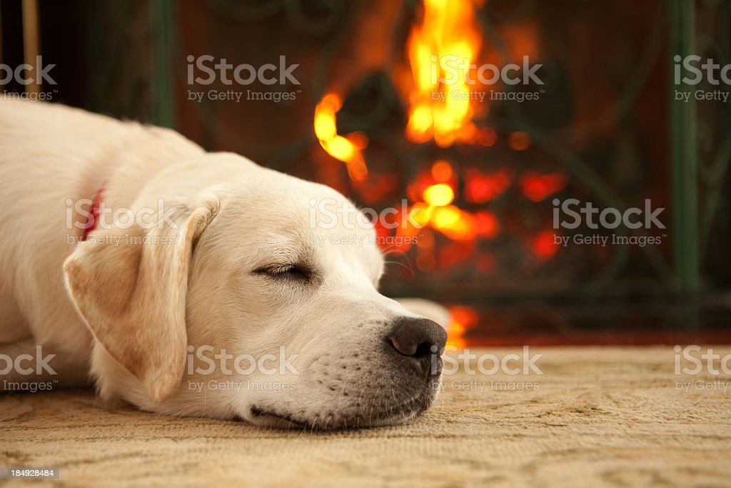 Puppy sleeping by the fireplace stock photo