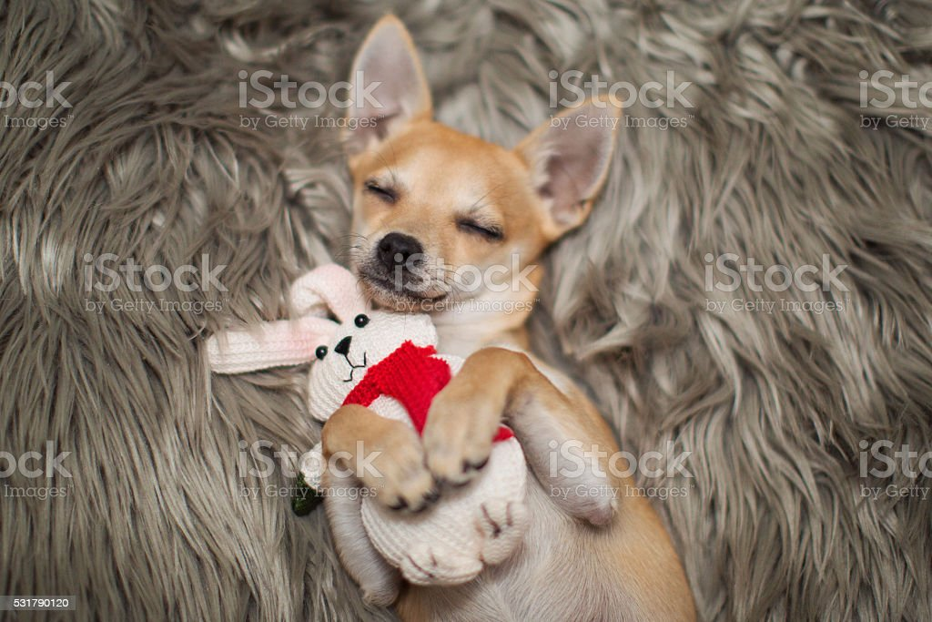 puppy sleeping with his baby bunny stock photo