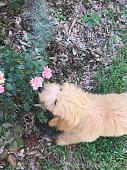 istock Puppy smelling flowers 1257594954