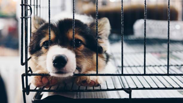 그래서 외 롭 고 슬픔 케이지 개에서 혼자 자 고 귀여운 강아지 - 제조 공장 뉴스 사진 이미지