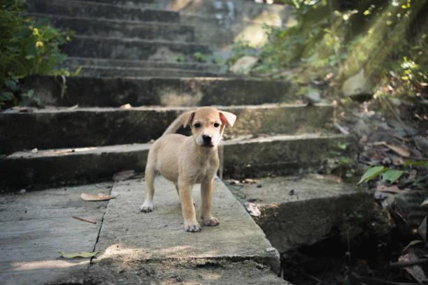 puppy staande op oude plek - dog looking at floor path stockfoto's en -beelden